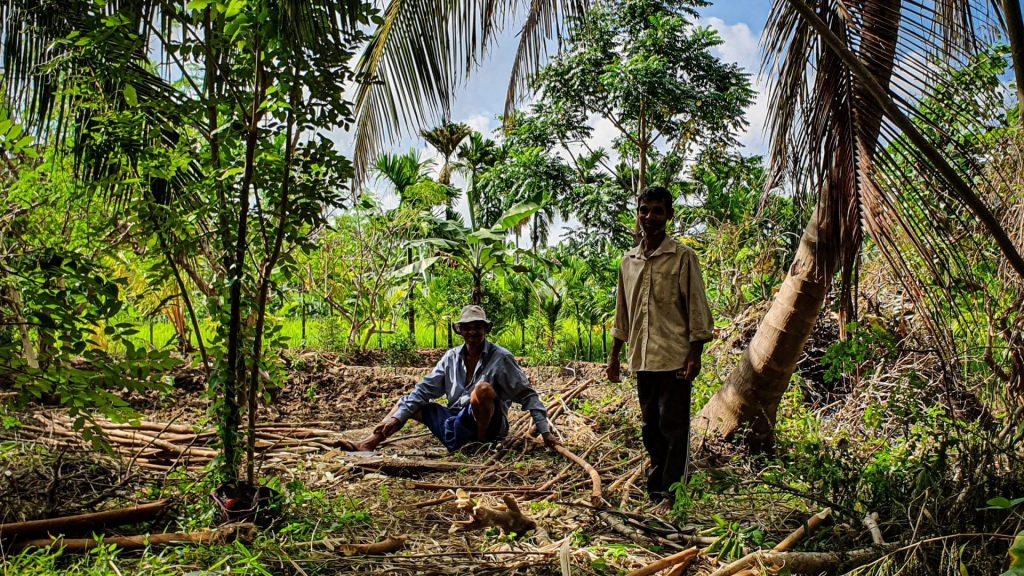 Harde werkers op het land Blue Mountains View Dambulla