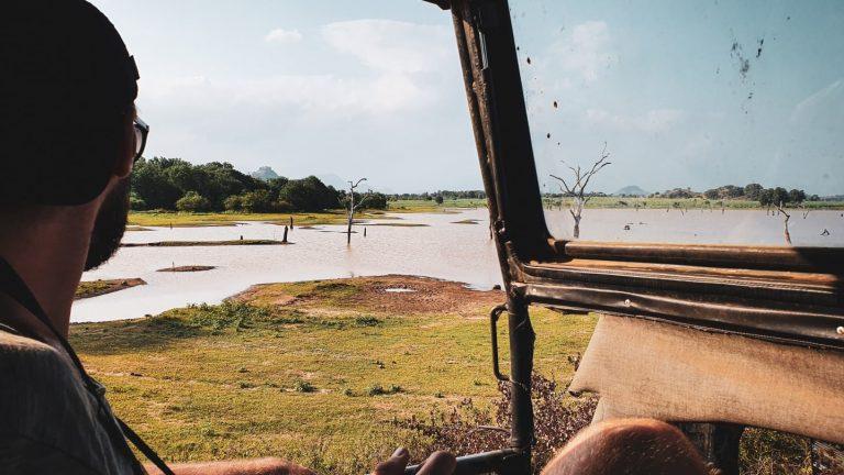 Reisstel.nl | Olifanten in Sri Lanka: alle opties om olifanten te spotten